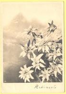 Tematica - Fiori - 1939 - 30c - Stelle Alpine - Stella Alpina - Ardimento - Viaggiata Da Coredo Per Modena - Fiori