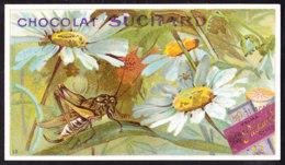 CHROMO Chocolat SUCHARD   Animaux    Grasshopper  Sauterelle  Serie 163 - Suchard