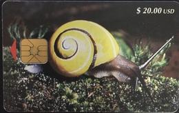 Paco \ CUBA \ CU-023 \ Yellow Snail (Polymita Picta) \ Usata - Cuba