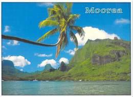 Polynésie Française MOOREA La Baie De Cook à Moorea  (B)(BV) TEVA SYLVAIN 1504 Tahiti - Polynésie Française