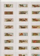 Serie  24 Stuks  - Aziatische Kunst - Bagues De Cigares