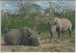 Rhinos  Kenya  HIPPO  RHINOZEROS   Nice Stamp - Rhinoceros