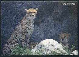 Cheetah Brothers In Serengeti - . CP Postée En 1908 . Timbres Zebras - Zebres. Guepard - Tanzanie
