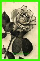 FLOWERS, FLEURS - ROSES , SPARKLES - TRAVEL IN 1906 - SERIE 94 - C . T. & CIE À G. - Fleurs