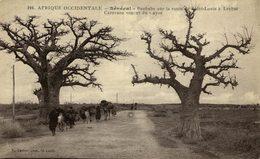 Senegal-Baobabs Sur La Route De Saint Louis A Leybar - Senegal