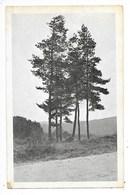 EGLISOLLES  (cpa 63)   Route De Viverols   -  L 1 - Autres Communes