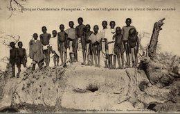 Sénégal - Jeunes Indigènes Sur Un Vieux Baoba Couché - Senegal