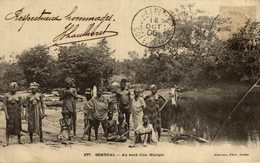 177. Sénégal, Au Bord D'un Marigot - Senegal