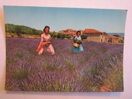 Agriculture Culture De La Lavande Femme - Cultures