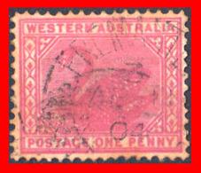 AUSTRALIA (OCEANIA)  SELLO WESTERN AUSTRALIA 1902 - Usati