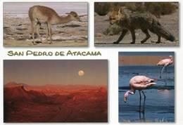 Lote PEP1308, Chile, Postal, Postcard, San Pedro De Atacama, Fauna, Bird, Desert, Sunset - Chile