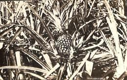 Singapour - Pine Apple Field (1927 To  Belgium) - Singapour