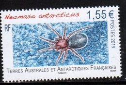 TAAF ,  FRENCH ANTARCTIC, 2019, MNH,SPIDERS, 1v - Spiders