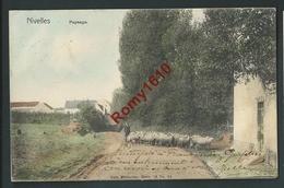 Nivelles. 1905. Paysan, Moutons. Paysage En Couleurs. Nels Série 76, N°35.  Scan Recto/verso - Nivelles