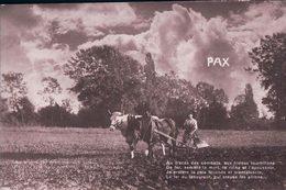 Le Labours, Attelage D'un Cheval Et D'un Boeuf à La Charrue (6.11.16) - Cultures