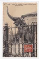 CPA 75 PARIS Jardin Des Plantes L'élephant Kouch Fait Le Beau Elephant De L'Inde - Parks, Gärten
