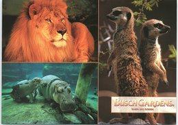 Animals - Multi View, Lion, Hippos, Meerkats - Animals