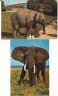 Lot De 2 Cartes - Eléphants - Éléphants