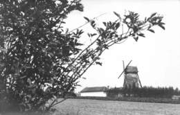 Foto , Geen Postkaart! Foto Van De Windmolen Molen Van Wervik X 5923 - Wervik