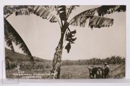 Original Photographic Postcard - Postal Mexico - Alrededores Cordoba - Farm Worker - México