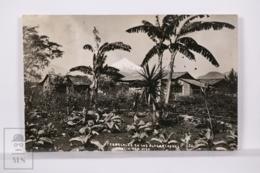 Original Photographic Postcard - Postal Mexico - Tabacales - Tobacco - Outskirts Of Fortin - Veracruz - México