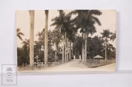 Original Photographic Postcard - Postal Mexico - Palmeras De Las Animas - Palm Trees - Fortin Veracruz - México