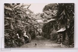 Original Photographic Postcard - Postal Mexico - Rincones Tropicales - Cordoba - Veracruz - Tropical Corners - México