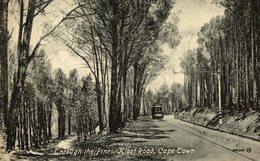 THROUGH THE PINES KLOOF ROAD CAPE TOWN   South African - Sudáfrica