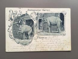 AACHEN - Tiergarten - Zoologischer Garten - Dierentuin - Zoo - Jardin Zoologique - Elephant - Olifant - 1901 - Aken