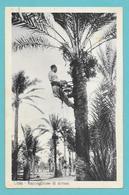 LIBIA LIBYA RACCOGLITORE DI DATTERI 1940 - Libye