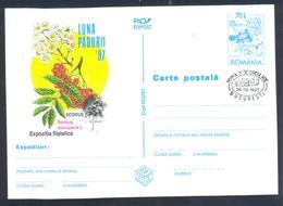 Romania 1997  Postal Stationery Card Flora Mushroom Pilz Champignon Fungi; Trees Rowan, Mountain-ash (Sorbus Aucuparia) - Pilze