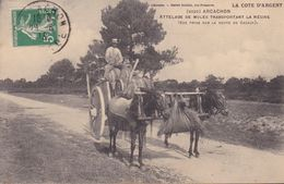 ARCACHON – Attelage De Mules Transportant La Résine - Arcachon