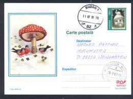 Romania 2001 Postal Stationery Card: Flora Mushroom Pilz Champignon Fungi; Red Mushrum; Birds Vogel Oiseaux; Rabbit - Pilze
