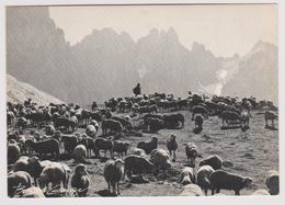 Transhumance - Ed. Bernard Grange N° 689 - Troupeau De Moutons Et Berger - Elevage