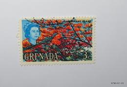 GRENADA 1966. 3c - Flamboyant Plant. SG233. Used. - Granada (...-1974)