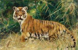@@@ MAGNET - Wilhelm Kuhnert, Tiger - Publicitaires