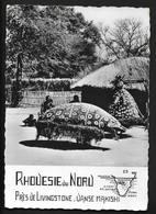 Rhodésie Du Nord Danse Makishi - Ethnologie Anthropologie Afrique Australe Zambi Lusaka - - Sambia