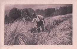 Ernte, La Récolte Du Seigle En 1900, Photo Walter Roth (7.2.16) - Cultures