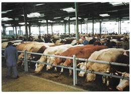 Chemillé Le Marché Aux Bestiaux Juillet 1991 Cliché Victor Bouyer - Chemille