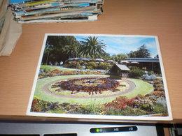 Floral Clock And King Snot Park Garden Restaurant Perth - Australie