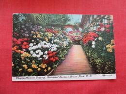 Chrysanthemun Display Botanical Display  Bronx  New York  Ref 3214 - Bronx