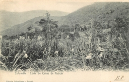 COLOMBIA CORTE DE CANAS DE AZUCAR LIBRERIA COLOMBIANA BOGOTA - Kolumbien