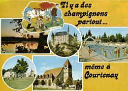 1 Cpsm Il Y à Des Champignon Partout Même à Courtenay - Courtenay