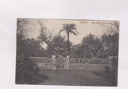 CPA LE CAIRE, THE HOLY TREE En 1918! - Le Caire