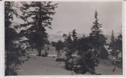 Romania - Peisaj Montan, Poiana - Carte Postala Anii 1930- Winter Landscape (Bucegi? Poiana Brasov?), Unused - Romania