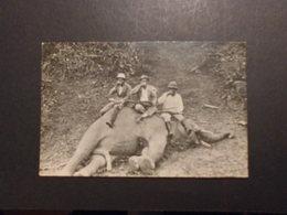 Nord Borneo? AK Elefantenjagd */ungelaufen - Cartes Postales