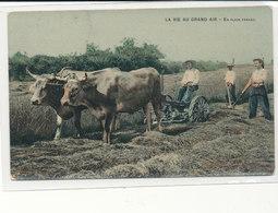 La Vie Au Grand Air - Attelage De Bœufs Devant Faucheuse  Carte Couleur Glacée - Cultures