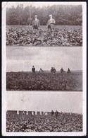 RARE ! CARTE PHOTO * FIRME VANMARCKE & MEGANCK KOEKELBERG * CULTIVEURS DE POMMES DE TERRE EN POLOGNE !! Voir 3 Scans - Koekelberg