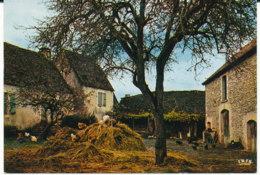 Cour De Ferme En Auvergne - Fermes