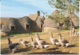 Oies En Périgord- Cabanes De Breuil - Fermes